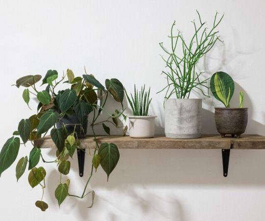 Groene kamerplanten | Populaire groene kamerplanten | GroenRijk Beneden Leeuwen