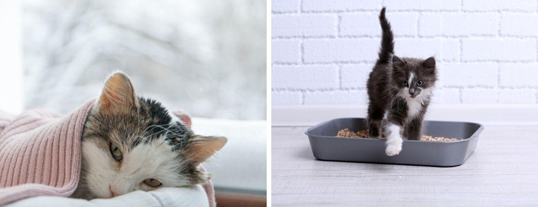 GroenRijk Beneden Leeuwen - Dierenwinkel - Katten