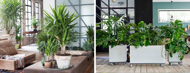 Groene kamerplanten | Palm | Gatenplant | GroenRijk Beneden Leeuwen