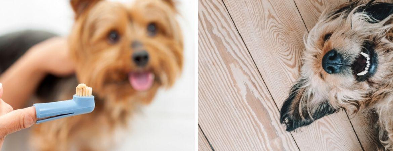 Honden | Dierenwinkel | GroenRijk Beneden Leeuwen