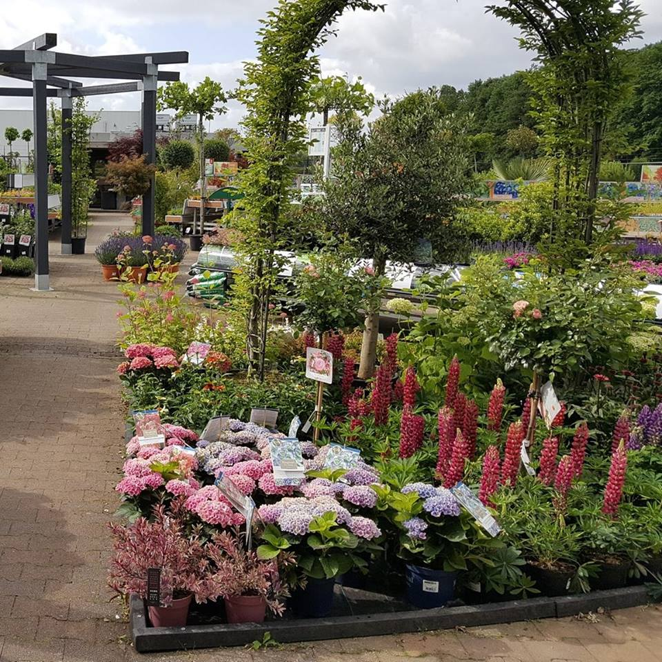 Planten kopen tijdens onze koopzondag nabij Nijmegen