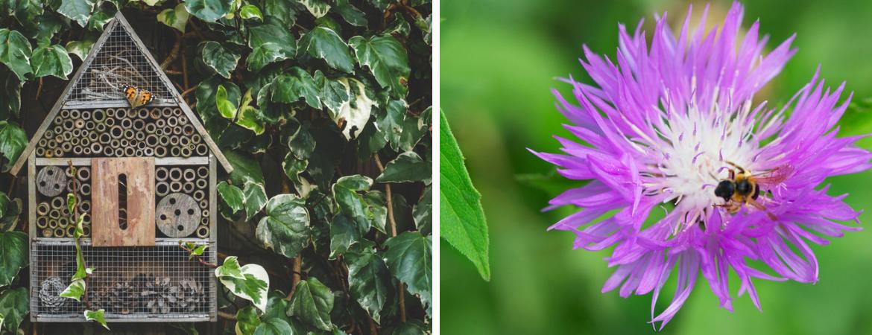 Vlinders en insecten in de tuin GroenRijk Beneden Leeuwen